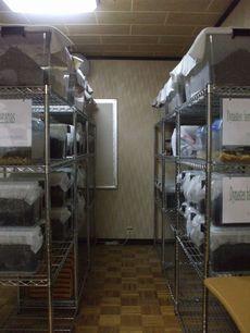 マット発酵