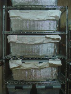 発酵マット
